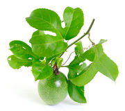Passionfruit on white background Royalty Free Stock Images