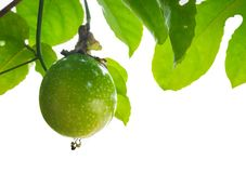 Passionfrukt, Jamaica honung-diar, den gula granadillaen Arkivfoton