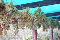 Passito wine Royalty Free Stock Photography