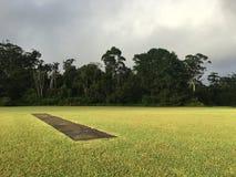 Passo australiano del cricket Fotografia Stock Libera da Diritti