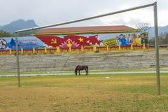 Passo de futebol, com cavalo Foto de Stock