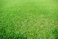 Passo di calcio dell'erba verde fotografia stock