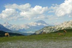 Passo Giau, dolomity Obrazy Stock