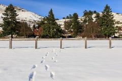 Passo su neve fresca Immagini Stock