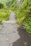 Passos concretos em um trajeto coberto de vegetação Imagem de Stock Royalty Free