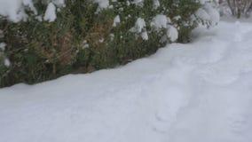Passos de seguimento na neve fresca 4K video estoque