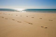 Passos na praia Foto de Stock
