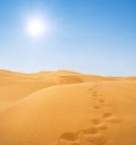 Passos no deserto Imagens de Stock Royalty Free