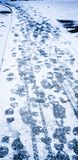 Passos no trajeto nevado Fotos de Stock