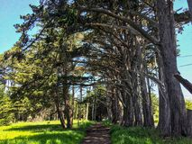 Passway till den Cepress dungen Fitzgerald Marine Reserve, Califor Royaltyfri Fotografi