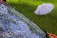 Past rain. Auto and umbrella past rain stock image