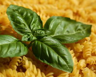 Pasta and basil Royalty Free Stock Image