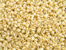 Pasta cockleshell Stock Photography