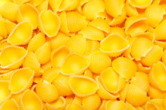 Pasta - Conchiglie. The macaroni. Closeup shot of three raw conchiglie Royalty Free Stock Photo