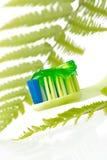 Pasta de dente erval Imagens de Stock Royalty Free