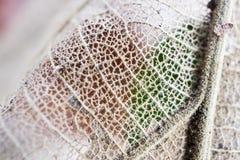 Pasta di cellulosa dalle foglie secche Immagine Stock