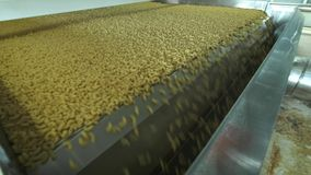 Pasta factory and pasta production stages. Close up of dry macaroni spilling from machine unit on modern food production stock video footage