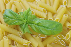Pasta macaroni with spice basil Stock Photo