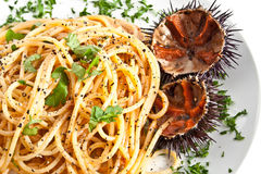 Pasta with sea urchin Royalty Free Stock Image