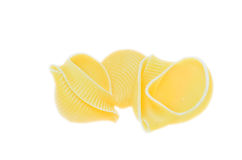 Pasta shells Royalty Free Stock Images
