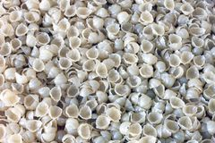 Pasta shells. Pasta background. Tasty background royalty free stock image