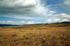 Pastagem da montanha alta no platô tibetano, China Fotos de Stock Royalty Free