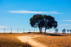 Pastagem da vaca da árvore fotografia de stock royalty free