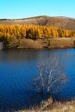 Pastagem de Bashang em Inter-Mongolia de China Imagens de Stock