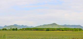 Pastagem de Tailândia em Hua-Hin Tailândia Fotos de Stock Royalty Free