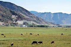 Pastagem do outono dentro em Tibet sul Foto de Stock