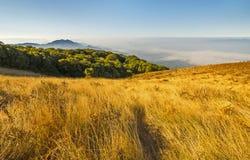 Pastagem dourada em Kew Mae Pan Nature Trail, parque da nação de Doi Inthanon imagem de stock