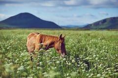 Pastagem e cavalo Fotos de Stock Royalty Free