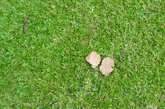 Pastagem e folha seca Fotos de Stock