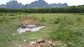 Pastagem e lago pequeno com opinião superior de encontro dos búfalos vídeos de arquivo