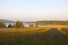 Pastagem e madeiras na névoa na manhã Fotografia de Stock