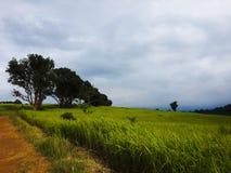 Pastagem e monte grande das árvores Fotografia de Stock