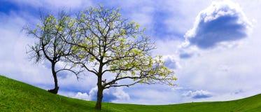 Pastagem e nuvens verdes Fotografia de Stock Royalty Free
