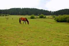 Pastagem feericamente da montanha de Wulong fotografia de stock royalty free