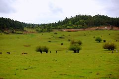 Pastagem feericamente da montanha de Wulong foto de stock