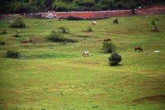 Pastagem feericamente da montanha de Wulong fotografia de stock