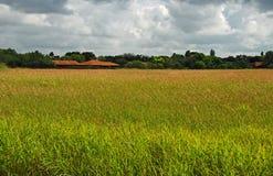 Pastagem, floresta e casas no dia nebuloso Imagem de Stock