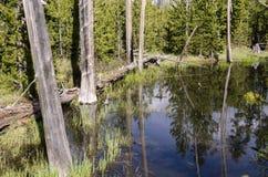 Pastagem, lagos e rios no parque nacional de Yellowstone Imagem de Stock