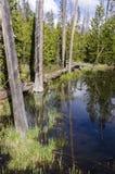 Pastagem, lagos e rios no parque nacional de Yellowstone Imagens de Stock