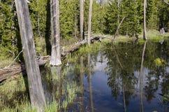 Pastagem, lagos e rios no parque nacional de Yellowstone Foto de Stock Royalty Free