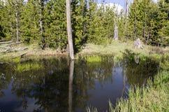 Pastagem, lagos e rios no parque nacional de Yellowstone Fotografia de Stock Royalty Free