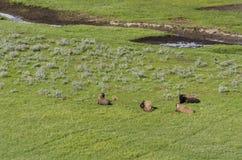 Pastagem, lagos e rios no parque nacional de Yellowstone Imagem de Stock Royalty Free