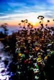 Pastagem na paisagem do nascer do sol imagens de stock royalty free
