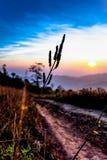 Pastagem na paisagem do nascer do sol fotos de stock royalty free