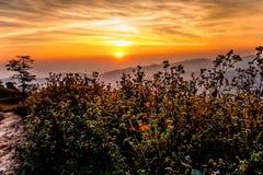 Pastagem no nascer do sol Imagem de Stock Royalty Free