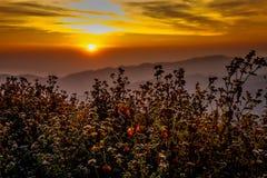 Pastagem no nascer do sol Imagem de Stock